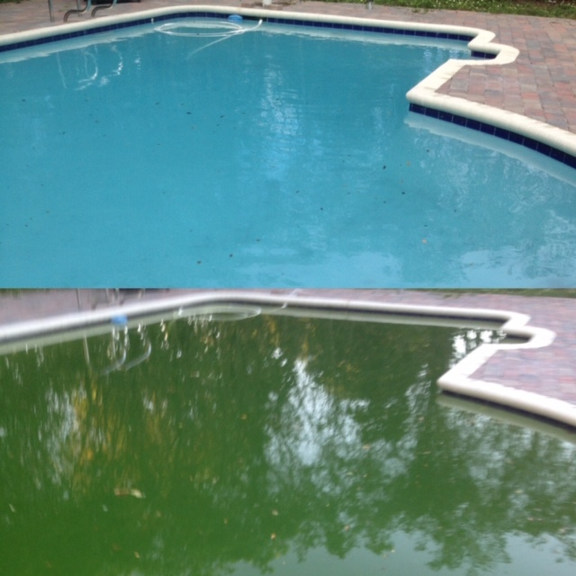 Pool Service Davie FL